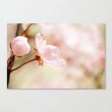 Cherry Blossom Flower Canvas Print