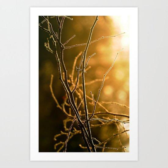 Amber Frost Art Print