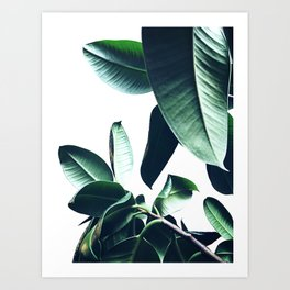 Ficus Elastica #26 #foliage #decor #art #society6 Art Print