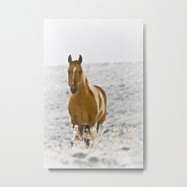 Horse in Winter Metal Print