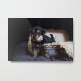 Australian kelpie puppy Metal Print
