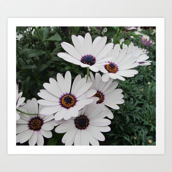 White flower II Art Print