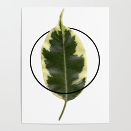 Nature. Minimalism. Photo. Society6. Minimalist. Hybrydus. II Poster