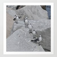 Laughing Gulls Lineup Art Print