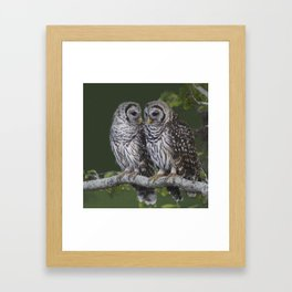 Barred Owls  Framed Art Print