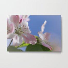 Apple Tree Blossoms InThe Blue Sky Metal Print