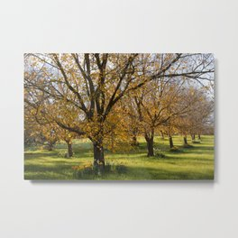 Autumn in the Orchard Metal Print