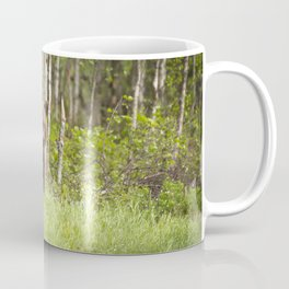 Amazing Huge Adult Grizzly Bear Strolling Proudly Across Wood Clearing Ultra HD Coffee Mug
