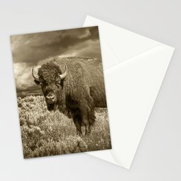 American Buffalo in Sepia Tone Stationery Cards