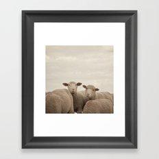 Smiling Sheep  Framed Art Print