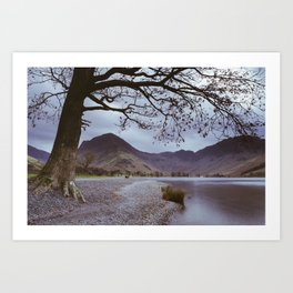 Tree over Buttermere. Lake District. Art Print
