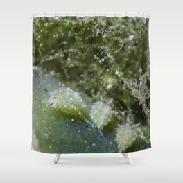 Shaun the sheep nudibranch herd Shower Curtain