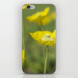 Dew Drops on Petals iPhone Skin