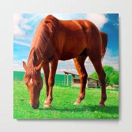 horse eating grass Metal Print