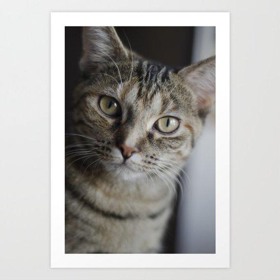 Piccolo the Cat Art Print
