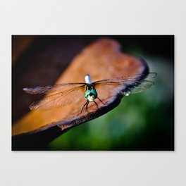 Dragonfly....smile Canvas Print