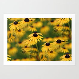 Field of Susans Art Print