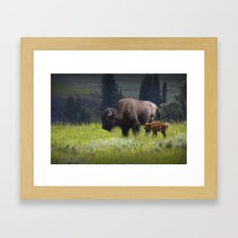 American Buffalo Bison Mother and Calf in Yellowstone National Park Framed Art Print