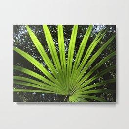 Palm leaf Belize Metal Print