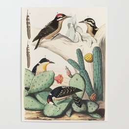 Woodpeckers And Cacti Poster