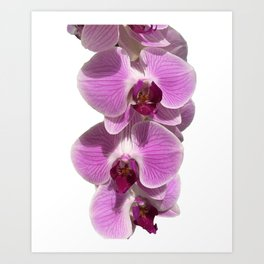 Bodacious bloom Art Print