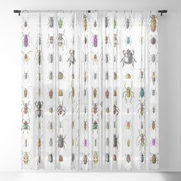 Beetlemania / Get your entomology on! Sheer Curtain