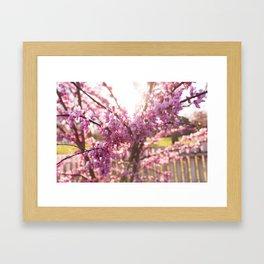 Blossoms Pt. 2 Framed Art Print