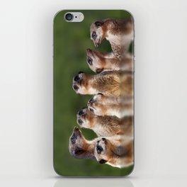 Meerkat Mob iPhone Skin