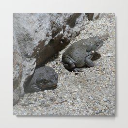 Toads Metal Print