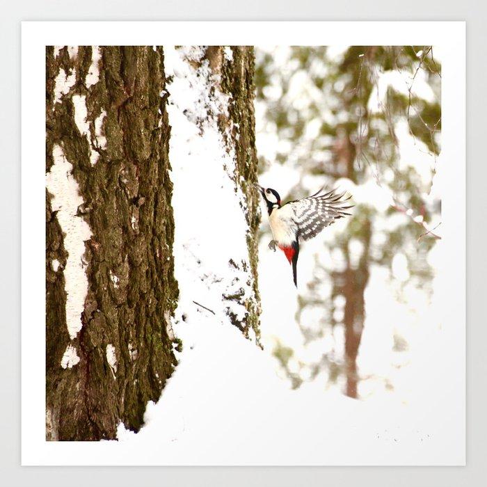 Woodpecker In Forest Art Print