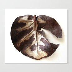 Single dry leaf Canvas Print