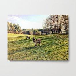 Donkey Days Metal Print