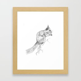 Red Squirrel Framed Art Print