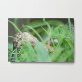 Duck hiding in the grass, Marrum, Friesland - The netherlands Metal Print