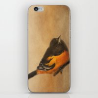 baltimore iPhone & iPod Skins featuring Baltimore Oriole by Photography and Fine Art by Pamela