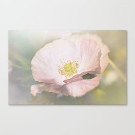 Light pink Flower Canvas Print