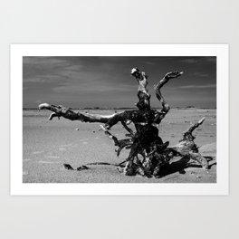 Deserted Driftwood  Art Print