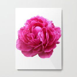 Pink peony Metal Print