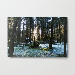 Winter Forest Photography Print Metal Print