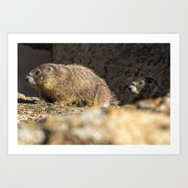 Two Marmots At Smith Rock Art Print