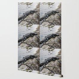 Eager Gator Wallpaper