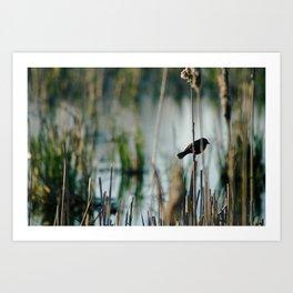 Bird In The Cattails Art Print
