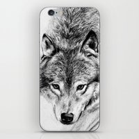 wolf iPhone & iPod Skins featuring Wolf by Anna Shell