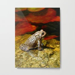Handsome Toad on Red Lilypad Metal Print