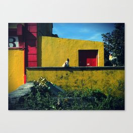 Irish Hens  Canvas Print