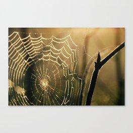 Cobwebs Canvas Print