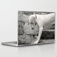 lab Laptop & iPad Skins featuring Croatian Lab by Upperleft Studios