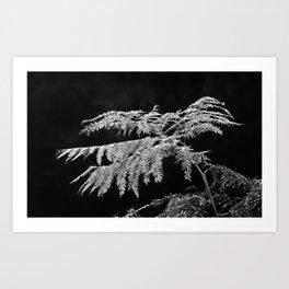 Contre-jour - 03 Art Print