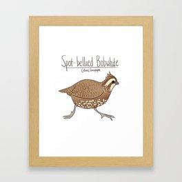 Spot-bellied Bobwhite Framed Art Print