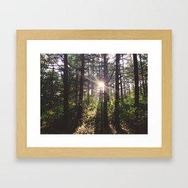 Forest Sun Framed Art Print